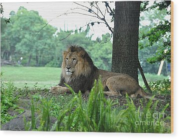 Wood Print featuring the photograph Jungle King by John Black