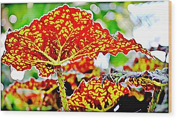 Wood Print featuring the photograph Jungle Leaf by Mindy Newman