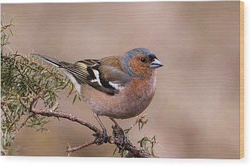 Juniper Bird Wood Print