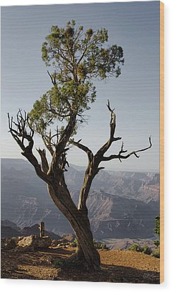 Juniper Tree At Grand Canyon II Wood Print by David Gordon