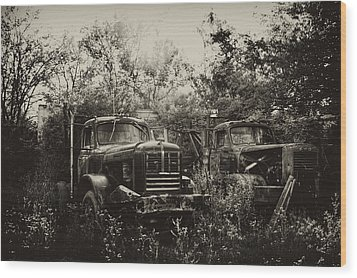 Junkyard Dogs IIi Wood Print by Off The Beaten Path Photography - Andrew Alexander