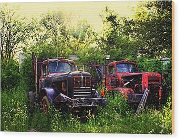 Junkyard Dogs Wood Print by Off The Beaten Path Photography - Andrew Alexander