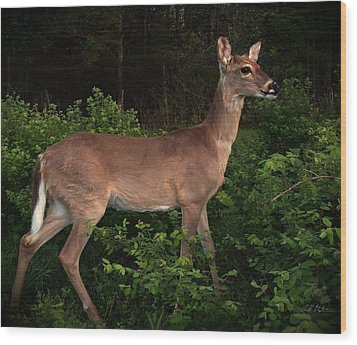 Just A Deer Wood Print by Bill Stephens