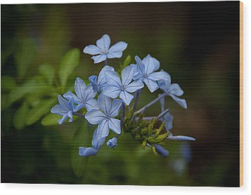 Wood Print featuring the photograph Just A Touch Of Blue by Monte Stevens