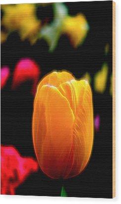 Just A Tulip Wood Print