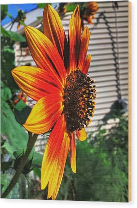 Just Another Sunflower Wood Print by Dustin Soph