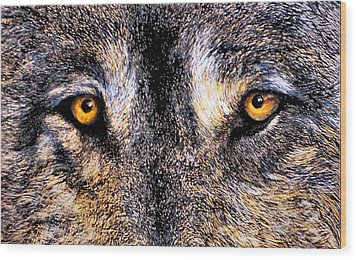 Just Watching Wolf Wood Print by JoLyn Holladay