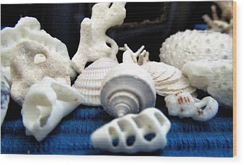 Just White Seashell 1 Wood Print by Danielle  Parent