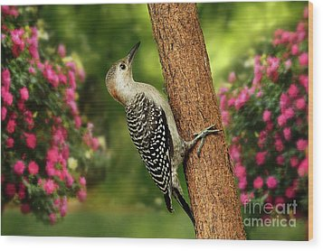 Wood Print featuring the photograph Juvenile Red Bellied Woodpecker by Darren Fisher