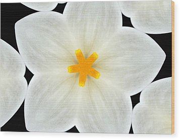 Kaleidoscope Of A Calla Lily Wood Print by Cathie Tyler