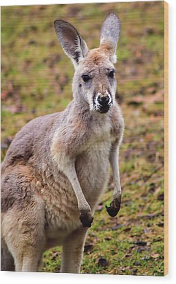 Kangaroo Wood Print by Matt Steffen
