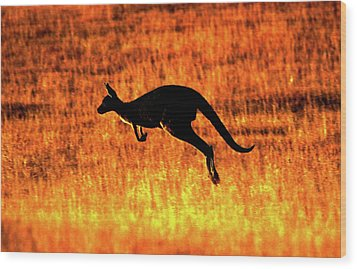 Kangaroo Sunset Wood Print
