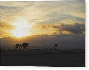 Kangaroos And Sunset Wood Print by Michael Warford
