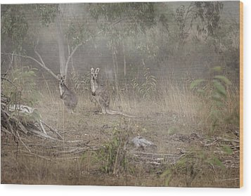 Kangaroos In The Mist Wood Print