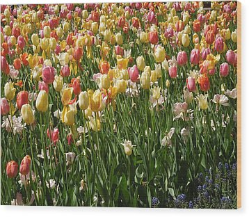 Kathy's Tulips Wood Print by Peg Toliver