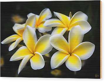 Kauai Plumerias Large Canvas Art, Canvas Print, Large Art, Large Wall Decor, Home Decor, Photograph Wood Print by David Millenheft
