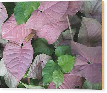 Wood Print featuring the photograph Kauai  Pinks by Carol Sweetwood