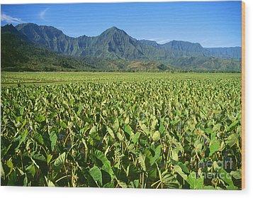 Kauai, Wet Taro Farm Wood Print by Himani - Printscapes