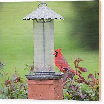 Wood Print featuring the photograph Kentucky Cardinal  by Ricky L Jones