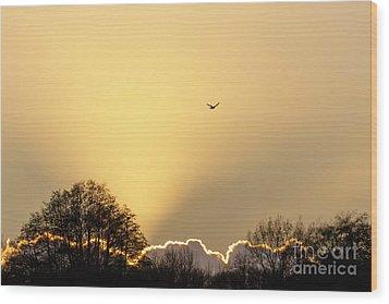 Kestrel Hunting At Sunset Wood Print