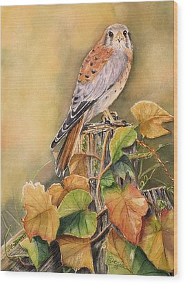 Kestrel In Fall Wood Print by Patricia Pushaw