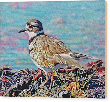 Killdeer  Wood Print by Ken Everett
