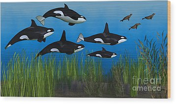 Killer Whale Pod Wood Print by Corey Ford