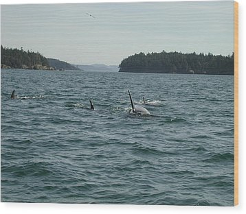 Killer Whales Wood Print