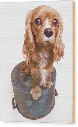 King Charles Spaniel Puppy Wood Print by Edward Fielding