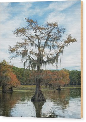 King Cypress Wood Print