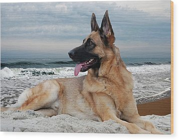King Of The Beach - German Shepherd Dog Wood Print