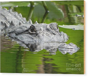 King Of The Florida Jungle Wood Print by Jack Norton