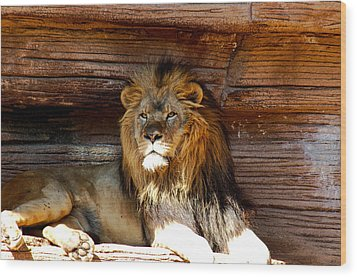King Of The Jungle Wood Print by Linda Brown