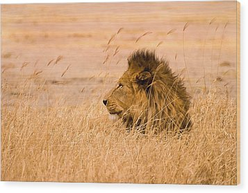 Wood Print featuring the photograph King Of The Pride by Adam Romanowicz