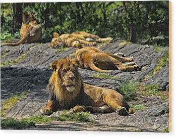 King Of The Pride Wood Print by Karol Livote