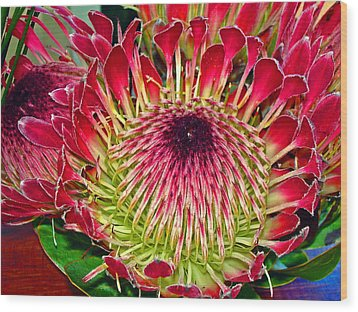 King Protea Wood Print by Michael Durst