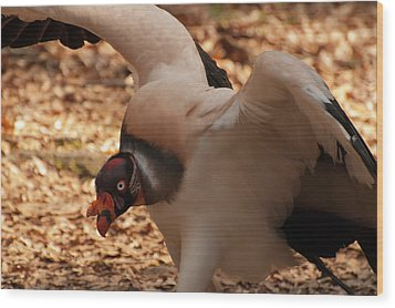 King Vulture 1 Wood Print by Chris Flees