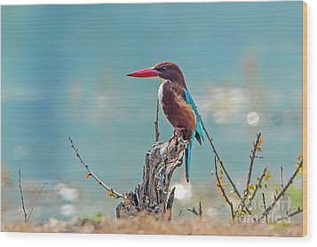 Kingfisher On A Stump Wood Print by Pravine Chester
