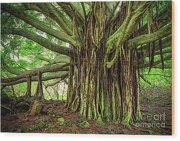 Kipahulu Banyan Tree Wood Print by Inge Johnsson