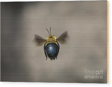 Kiss My Beehind  Wood Print by Andrea Silies