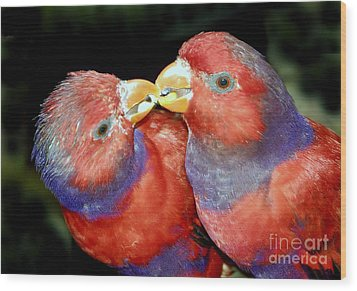 Kissing Birds Wood Print by David Lee Thompson