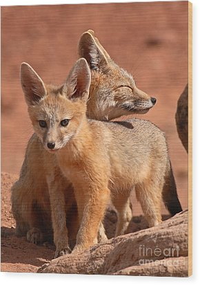 Kit Fox Mother Looking Over Pup Wood Print by Max Allen