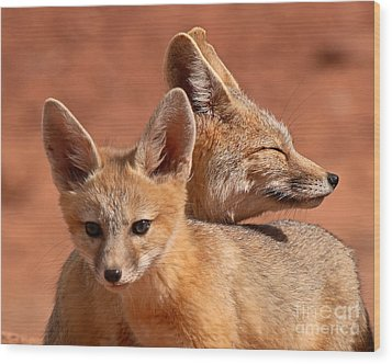 Kit Fox Pup Snuggling With Mother Wood Print by Max Allen