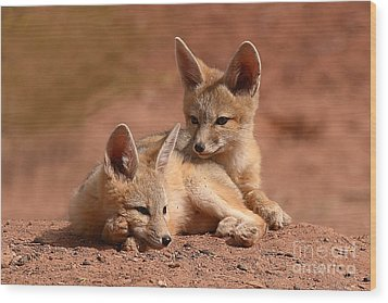 Kit Fox Pups On A Lazy Day Wood Print by Max Allen