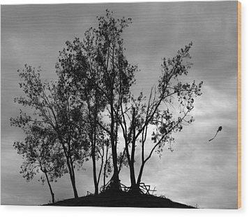 Kite Wood Print by Todd Fox