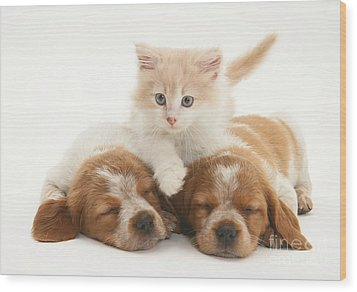 Kitten And Puppies Wood Print by Jane Burton