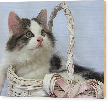 Kitten In Basket Wood Print by Jai Johnson