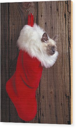 Kitten In Stocking Wood Print by Garry Gay