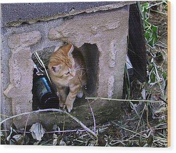 Kitten In The Junk Yard Wood Print