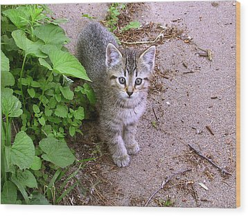 Kitten On The Patio Wood Print